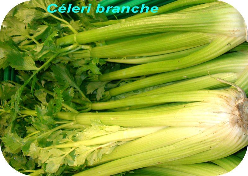 dictionnaire de cuisine et gastronomie - céleri-branche