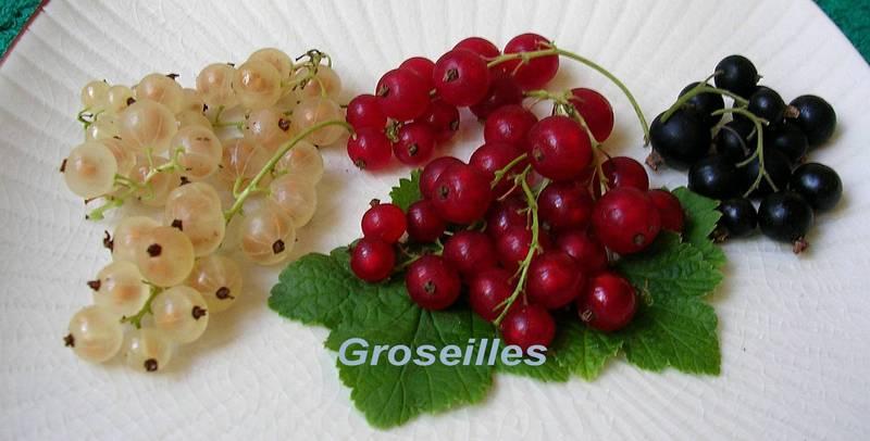 Dictionnaire de Cuisine et Gastronomie - Groseille