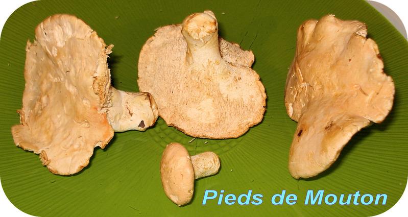 le pied de mouton a une couleur beige l 233 g 232 rement orang 233 e il contient des prot 233 ines des