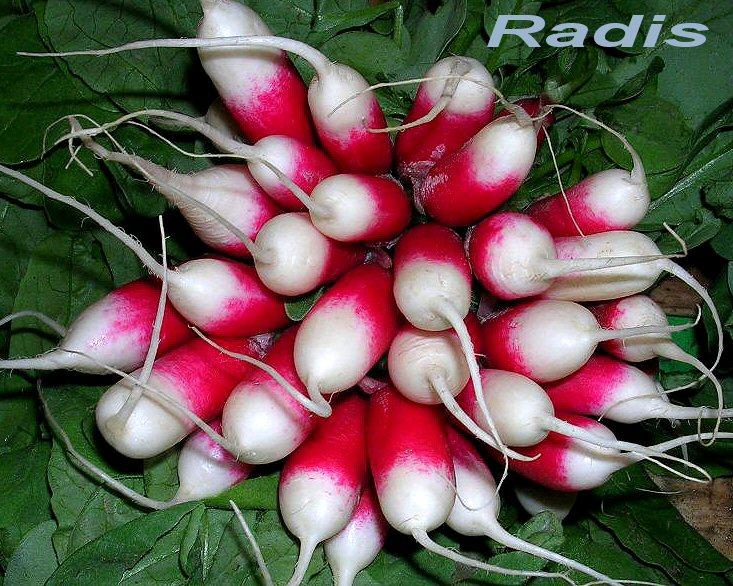 http://dico-cuisine.fr/images/Radis_DC.jpg