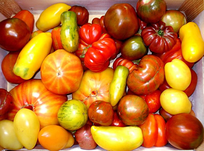 http://dico-cuisine.fr/images/Tomates_anciennes_DC_t.800.jpg