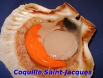 Coquille Saint-Jacques